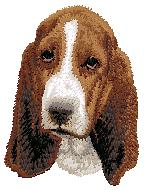 Hundbrodyr Bassethound valp