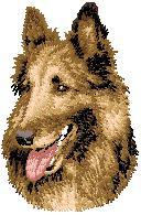 Hundbrodyr Tervueren