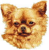 Hundbrodyr Chihuahua