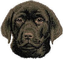 Hundbrodyr Labrador reteriever svart valp