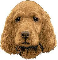 Hundbrodyr Irländsk setter valp