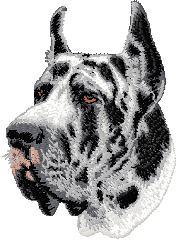 Hundbrodyr Grand danois harlekin kuperad