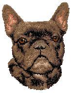 Hundbrodyr Fransk bulldog