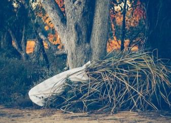 Gathered reeds