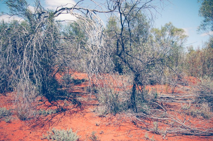 Scrub country (near Bourke)