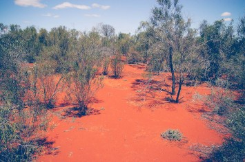 Red soil of the scrub country