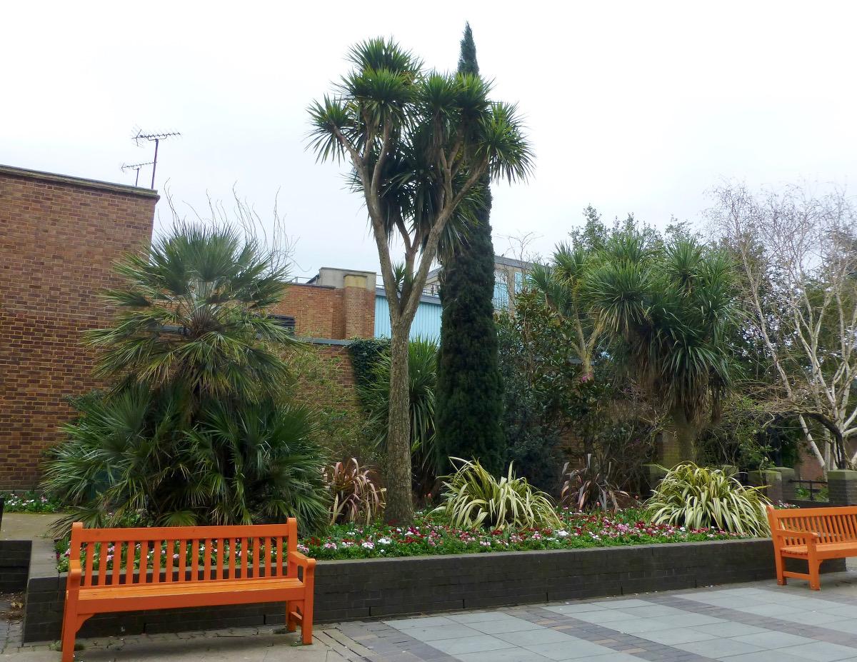 corfu cypress and mature palm trees and orange bench
