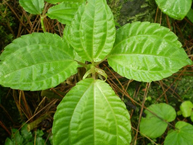 sumber : ceritaindahnyaindonesiaku.wordpress.com
