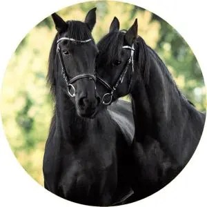 Black Horses Tire Cover