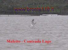 malt10032012 14