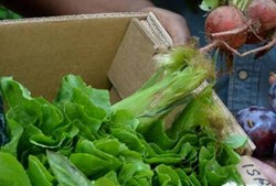 Get a Box of Healthy, Fresh, Local Food Every Wednesday in the Bronx for $12