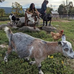 Family Escape Upstate at Pine Ridge Dude Ranch