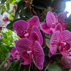 New York Botanical Garden Launches NYBG at Home