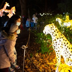 Our Favorite Parts of Holiday Lights at the Bronx Zoo + Holiday Lights Promo Code