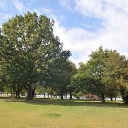 NYC Parks Invites Bronx Residents to Participate in Virtual Community Input Meetings