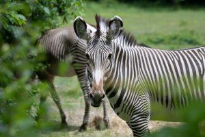 Spring Break at the Bronx Zoo + Special Bronx Zoo Membership Promo Code for Bronxmama Readers