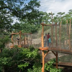 Five Ways to Enjoy the Bronx Zoo + Membership Promo Code