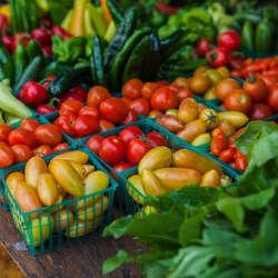 Network Launches Free Pop-Up Farmers Market for Hundreds of Bronx Families and Seniors