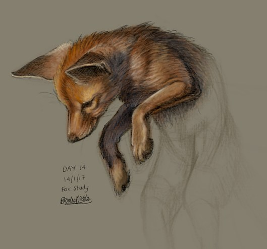 Fox study sketch on iPad Pro