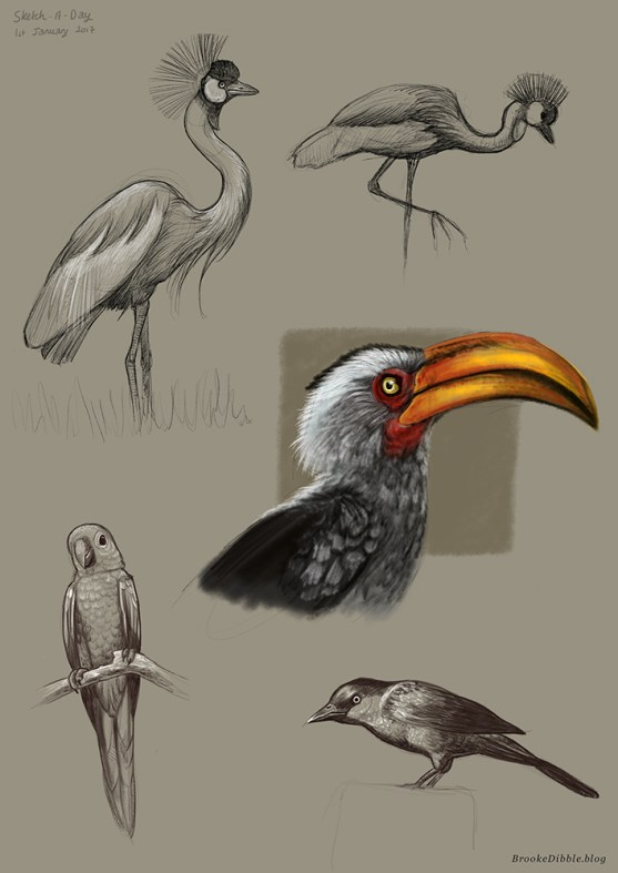 Sketch-a-Day quick sketch studies of birds on the iPad Pro using Procreate app based on misc photo refs