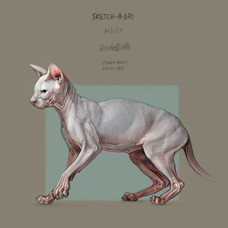 Sketch-a-day Sphynx cat drawing by Brooke Dibble