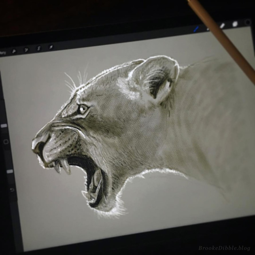 Quick sketch study of a lioness from photo ref