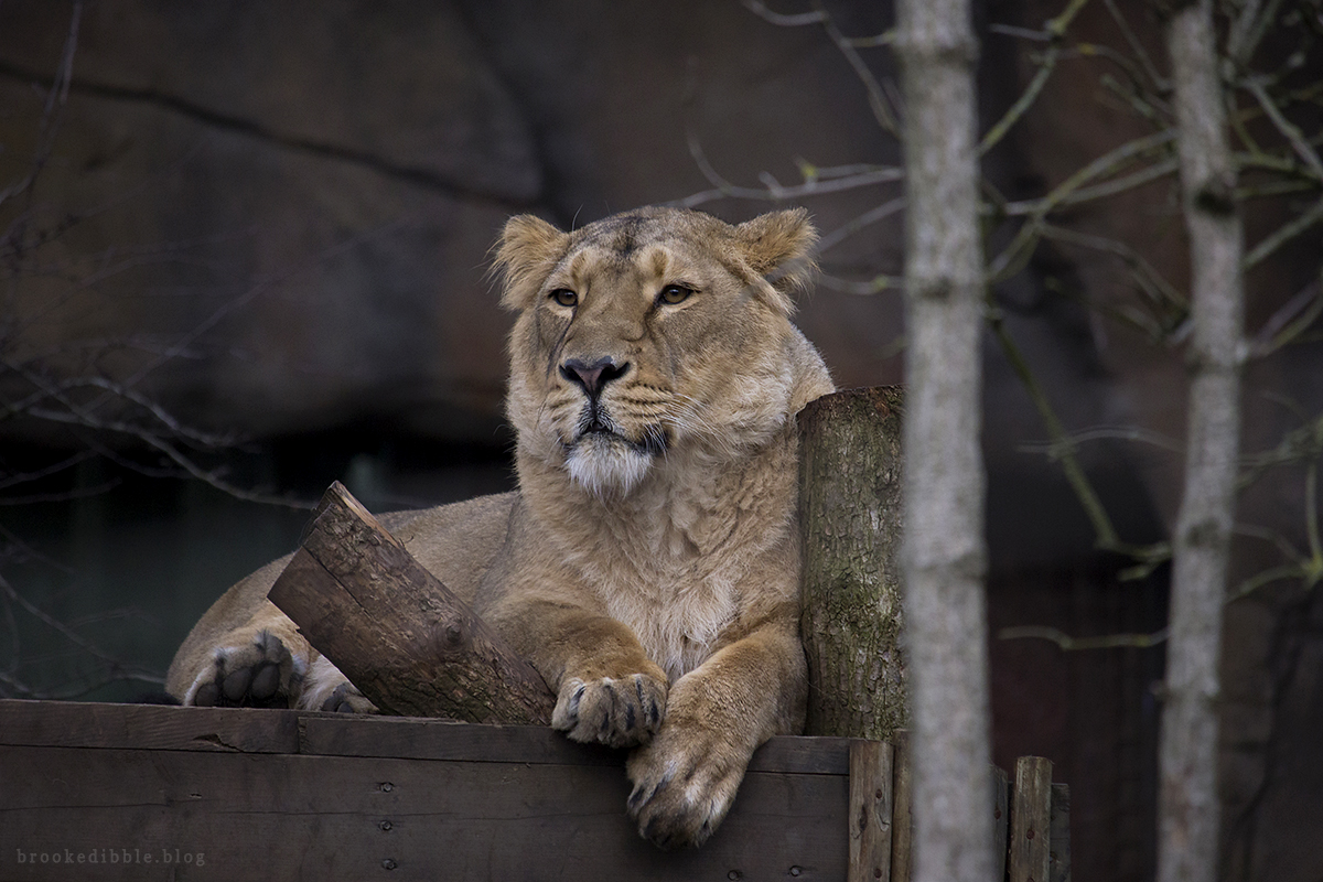 ZSL London Zoo trip + Canon 55-250mm IS STM lens review