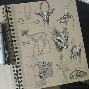 Quick study sketches in pen on toned tan paper of antelopes and gerenuks