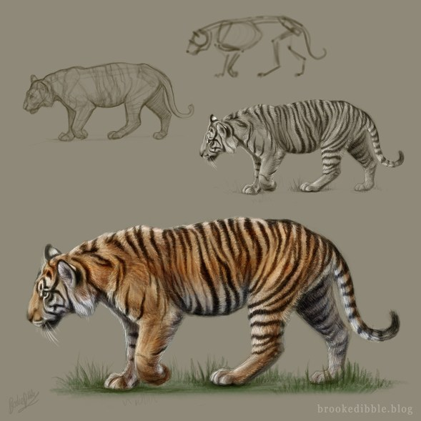 Tiger digital sketch (referenced from own video of Melati at ZSL London Zoo) April 2017