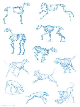 Dog study sketches Feb 17