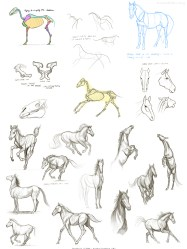 Horse study sketches Feb 17