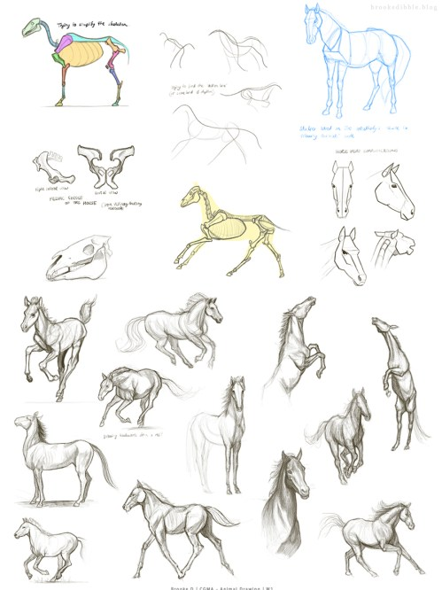 Horse study sketches Feb 17