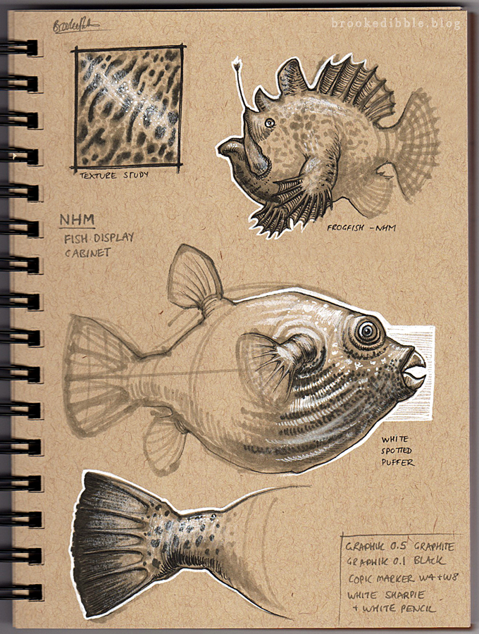 NHM sketches