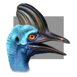 Cassowary bird study
