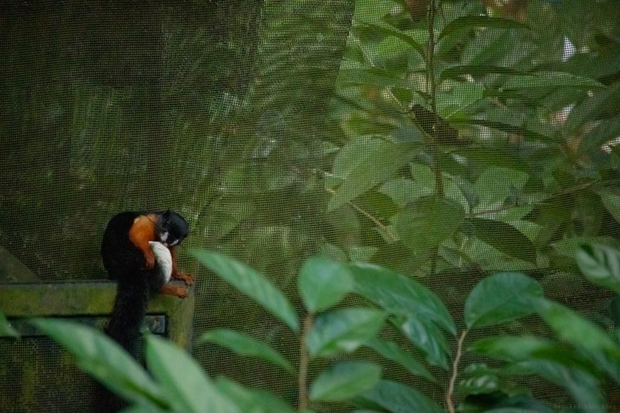 Singapore Zoo 21st Nov 2018