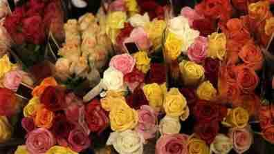 roses001_16x9