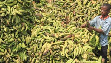 banana_market001_16x9