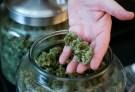 marijuana003