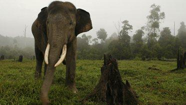 sumatran_elephant001_16x9
