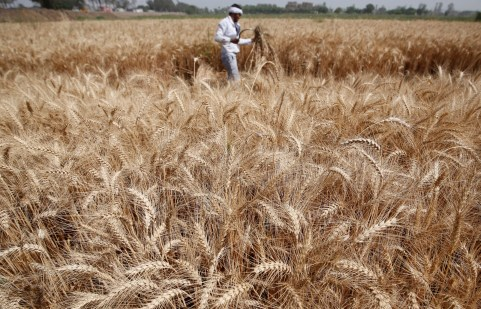 A farmer harvests wheat on Qalyub farm in the El-Kalubia governorate, northeast of Cairo, Egypt May 1, 2016. REUTERS/Amr Abdallah Dalsh - RTX2HOOW