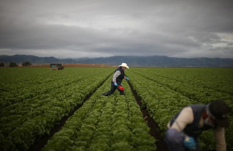 migrant farmworkers