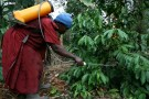 Hawa Nakawungu, a coffee farmer sprays her trees with pesticide on her farm near Uganda's capital Kampala, July 18, 2009. Nakawungu cut a space-age figure as she paced around her tiny coffee farm, squirting pesticide from a yellow pump mounted on her back.  REUTERS/Hereward Holland (UGANDA ENVIRONMENT FOOD) - GM1E597186D01