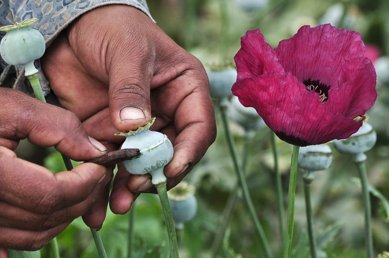 A man lances a poppy bulb to extract the sap, which will be used to make opium, at a field in the municipality of Heliodoro Castillo, in the mountain region of the state of Guerrero January 3, 2015. According to local media, 42% of the poppies produced in Mexico come from the state of Guerrero, where impoverished farmers in the mountain cultivate opium poppies as cash crop due to the extreme poverty in where they live. Picture taken January 3, 2015. REUTERS/Claudio Vargas (MEXICO - Tags: DRUGS SOCIETY POVERTY AGRICULTURE) - GM1EB2A0RFL01
