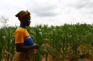 HIV-positive farmer Eunice Chiyabi walks near a field of maize during a visit by a home-based care team in Chikonga village, close to the town of Chikuni in the south of Zambia February 21, 2015. The caregivers on the Jesuit-run home-based care team at Chikuni run a capacity building and empowerment project at household level, offering training and assistance in crop-growing and animal rearing, as well as offering companionship, pastoral care and monitoring antiretroviral treatment compliance of HIV-AIDS patients. Picture taken February 21, 2015. REUTERS/Darrin Zammit Lupi (ZAMBIA - Tags: HEALTH AGRICULTURE DRUGS SOCIETY) - GM1EB2M1GPQ01