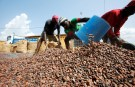 Workers fill sacks with cocoa beans in Soubre, Ivory Coast, July 19, 2018. picuture taken  July 19, 2018.  REUTERS/Thierry Gouegnon - RC19E77BB920