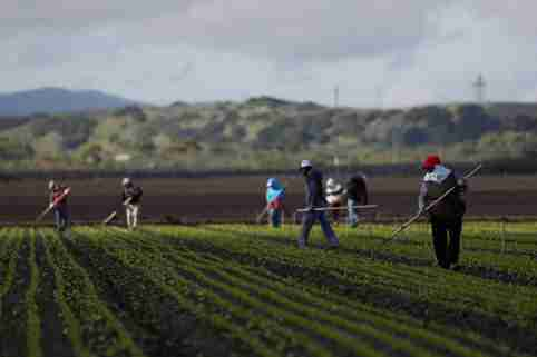 Migrant workers clean fields amid an outbreak of the coronavirus disease (COVID-19), in the Salinas Valley near Salinas, California, U.S., March 30, 2020. Picture taken March 30, 2020. REUTERS/Shannon Stapleton