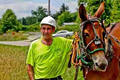 Old Bub, a mule working for the Peoples Rural Telephone Cooperative to lay fiber optic cable in Mckee, Kentucky