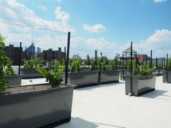 this view thursday night at rooftop reds. just add wine and pizza and billy crystal and meg ryan.