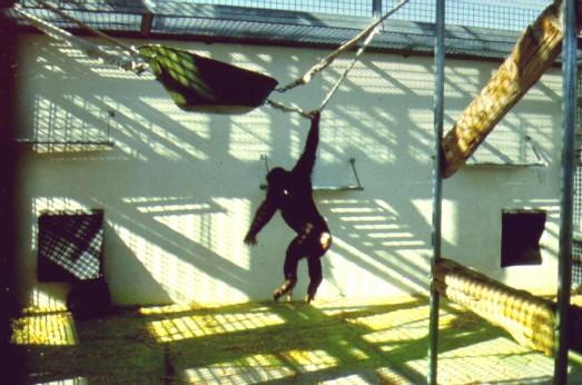 Chimpanzee Enclosure