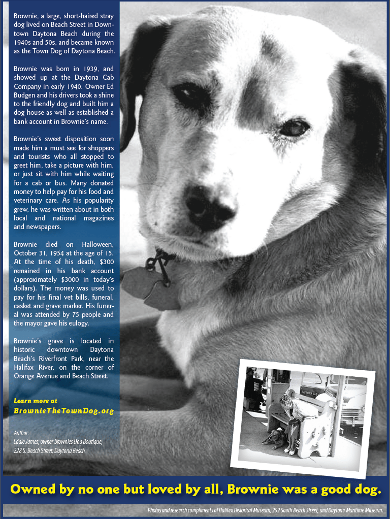 Brownie the Town Dog of Daytona is going to be highlighted in the latest Hotel Room Guide!